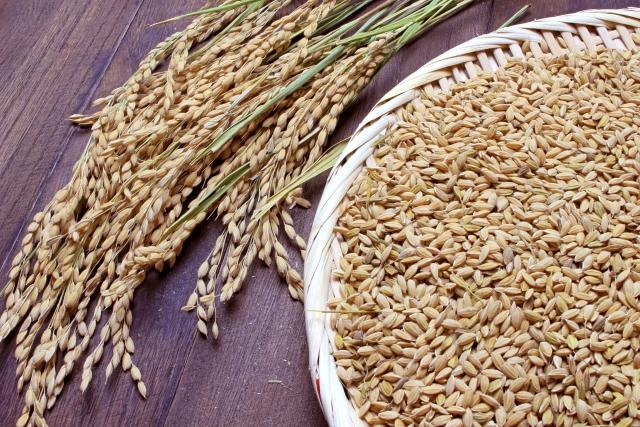 玄米には毒がある?