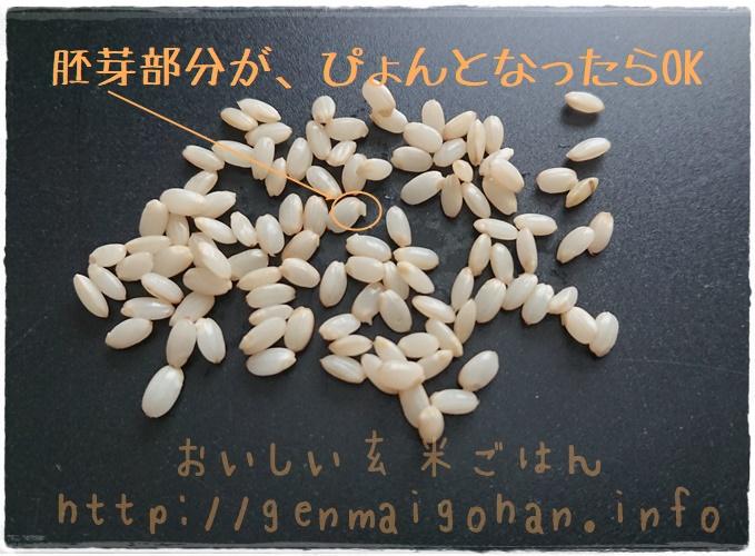 発芽玄米の作り方 発芽目安