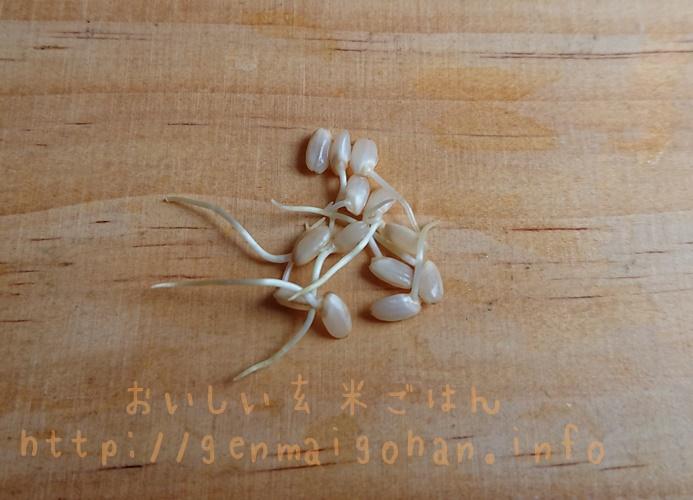 結わえる 特別栽培米 玄米を発芽させてみた